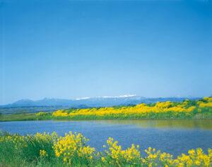 No.010278 船形山と菜の花