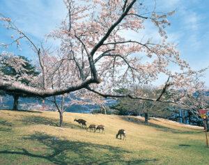 No.020040 春の鹿山公園