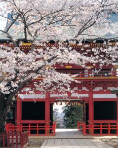No.030009 鹽竈神社の桜