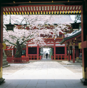 No.030010 鹽竈神社の桜