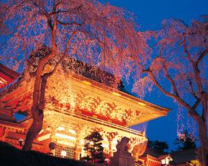No.030020 塩竈神社の夜桜