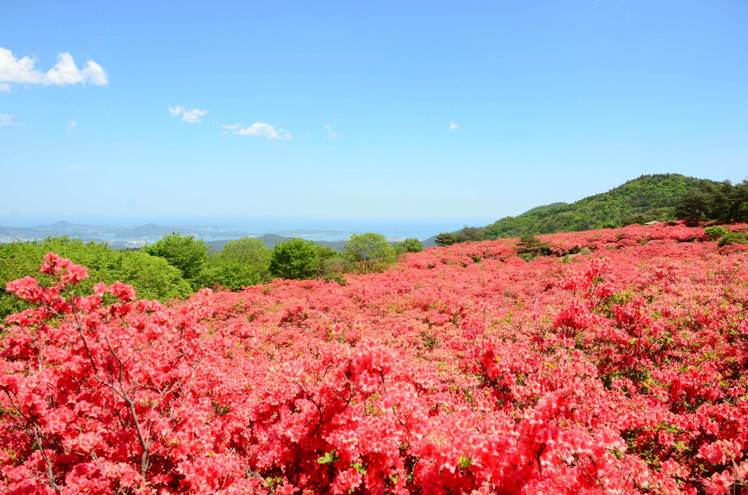 No.040007 徳仙丈山