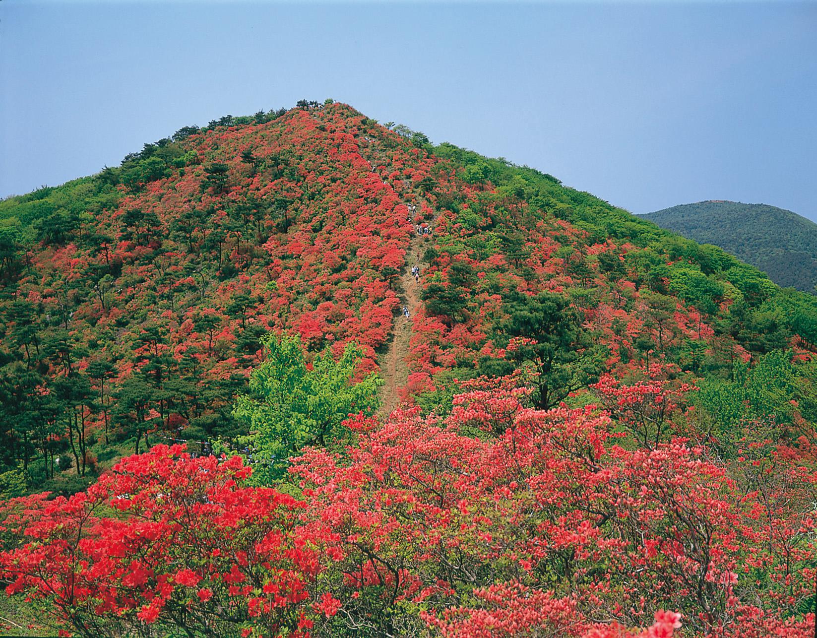 No.040062 徳仙丈山