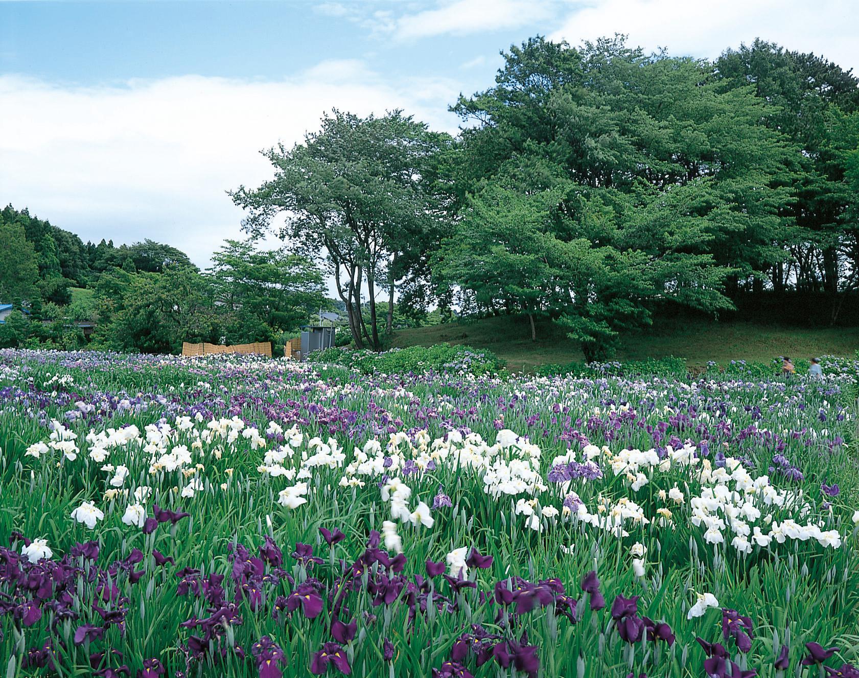 No.080020 多賀城廃寺跡