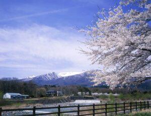 No.150024 桜と蔵王連峰