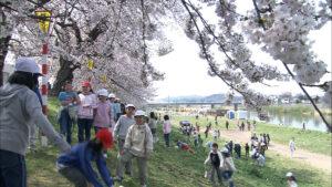 No.170002 白石川と桜並木