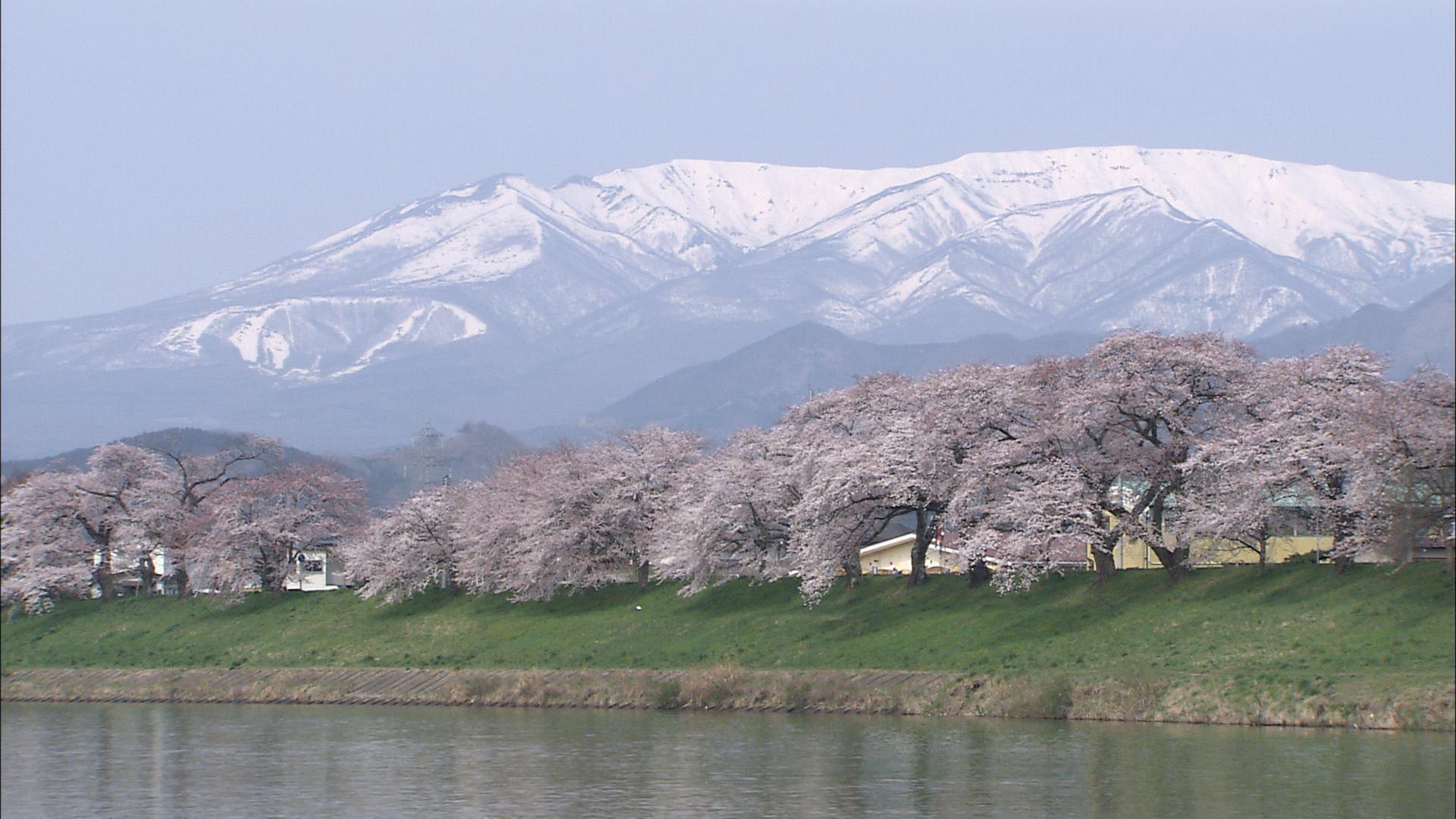 No.170005 白石川と桜並木