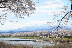 No.170022 蔵王・白石川と桜並木