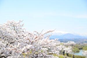 No.170023 蔵王・白石川と桜並木