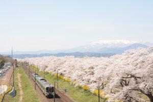 No.170026 蔵王・白石川と桜並木