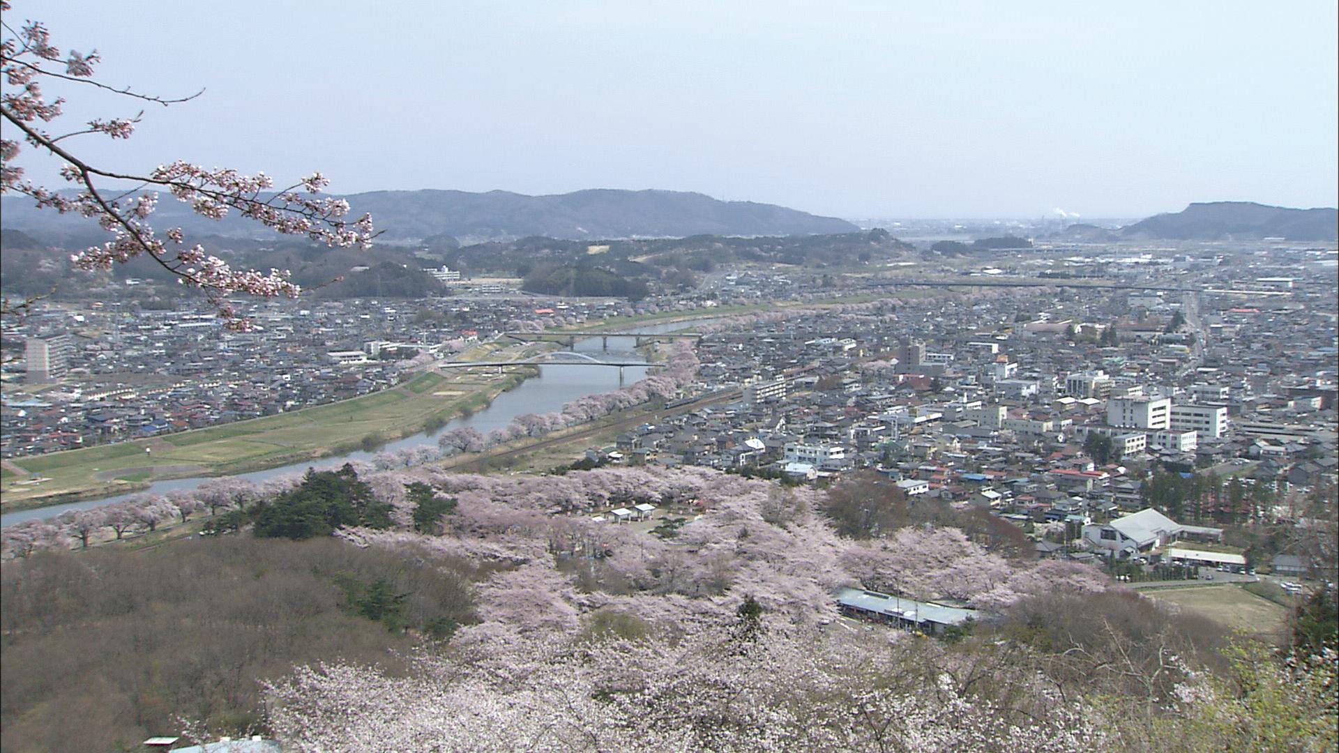 No.190001 白石川と桜並木