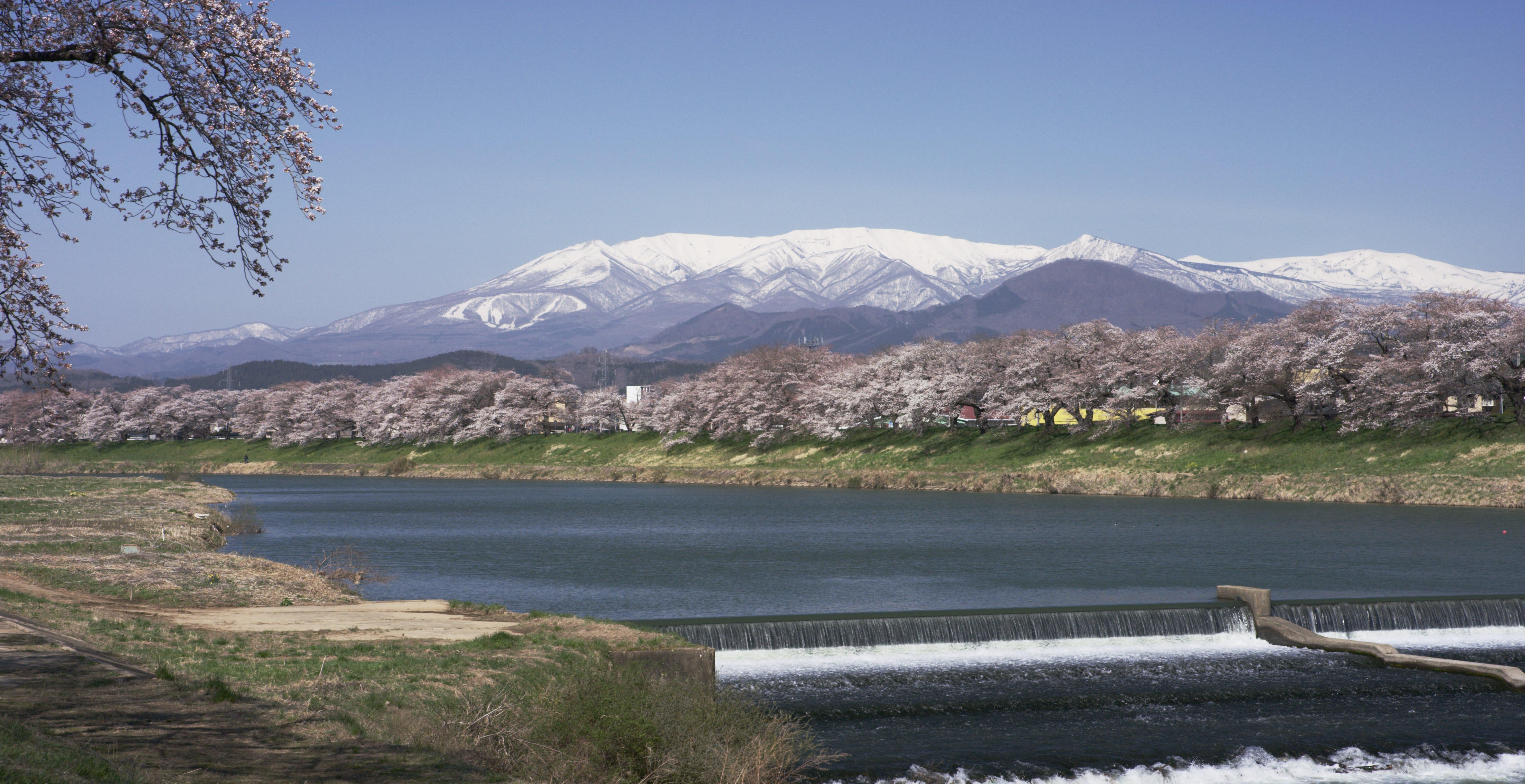 No.190008 白石川堤一目千本桜