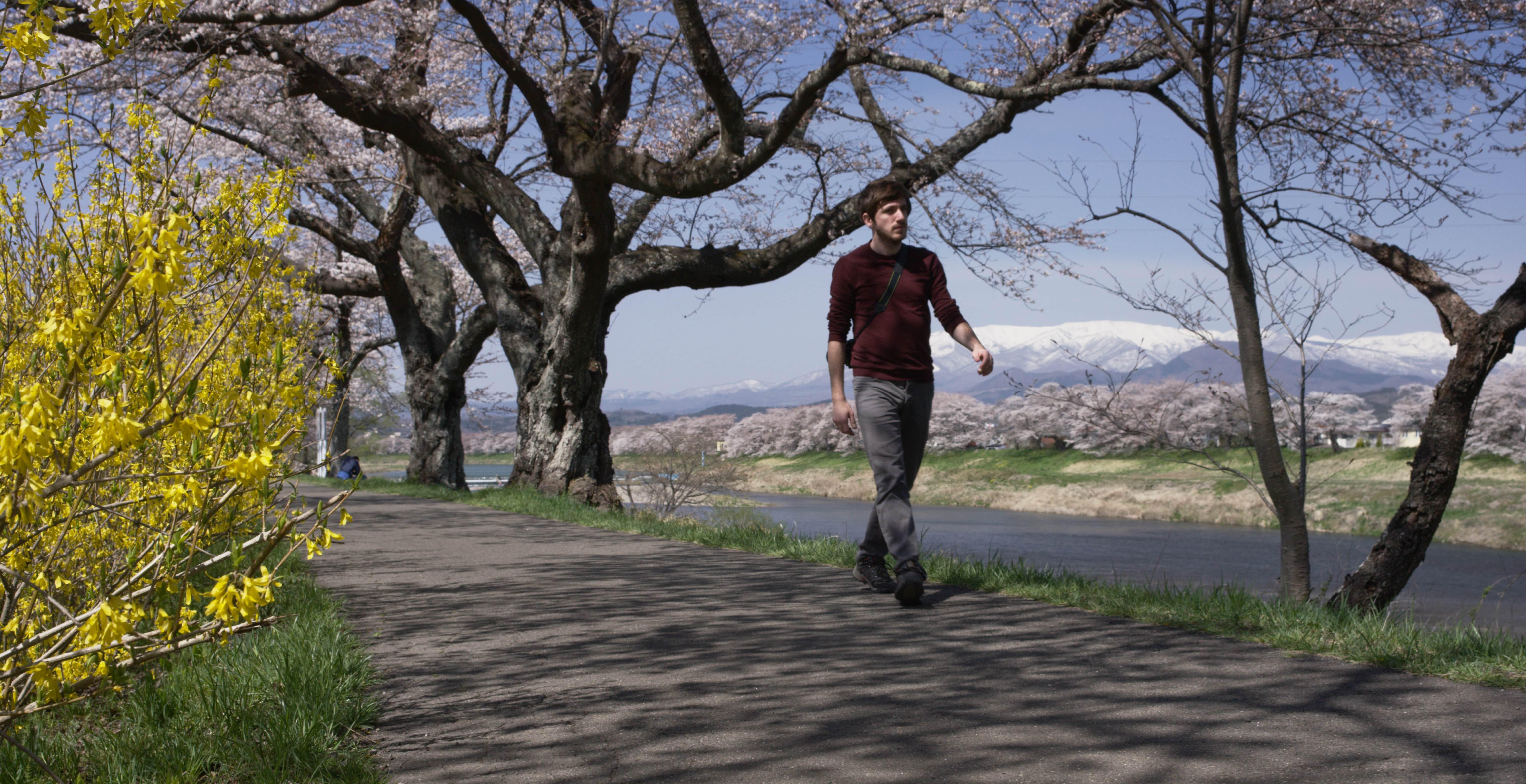 No.190015 白石川堤一目千本桜