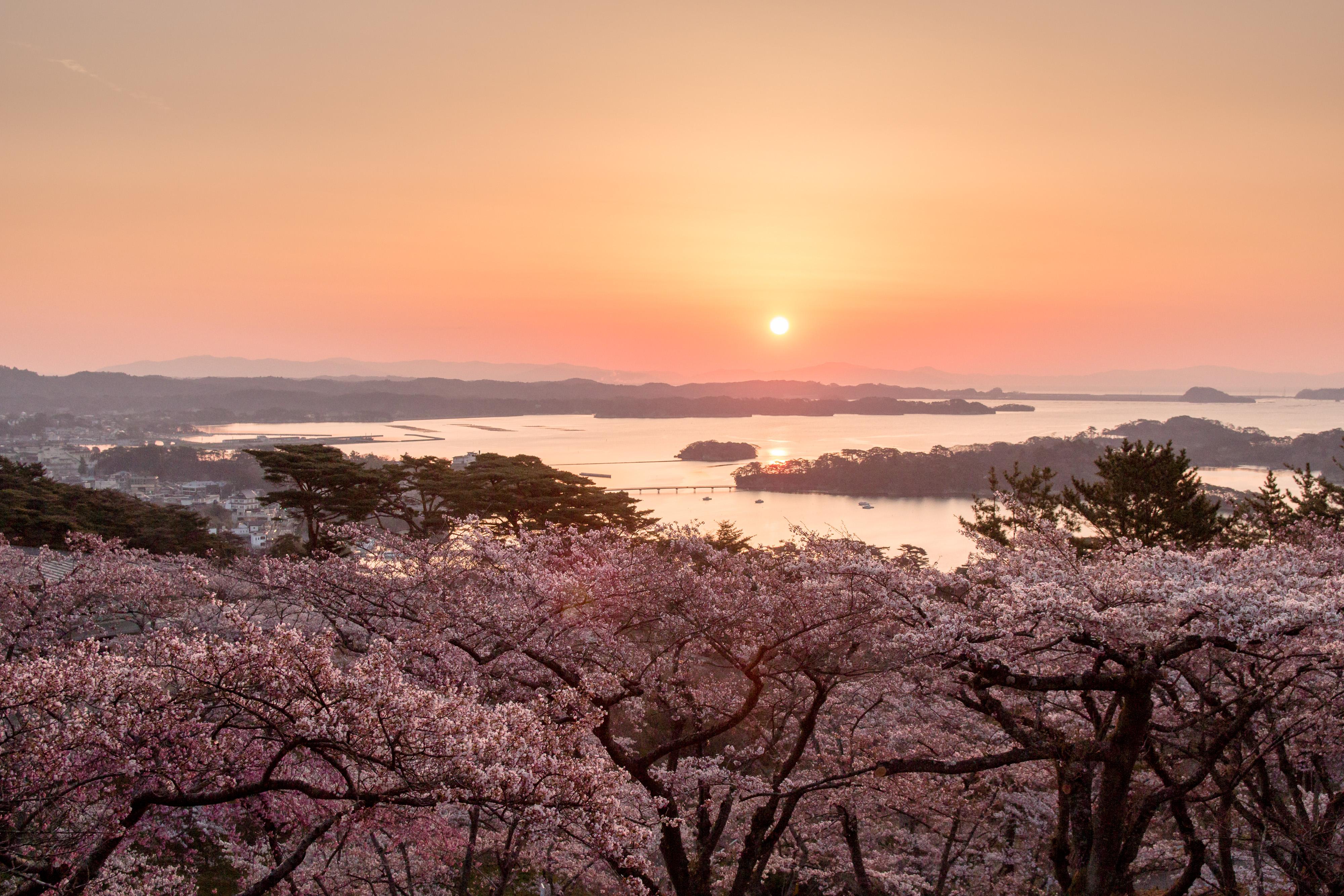 No.240002 朝日と桜と松島湾