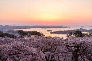 No.240003 朝日と桜と松島湾