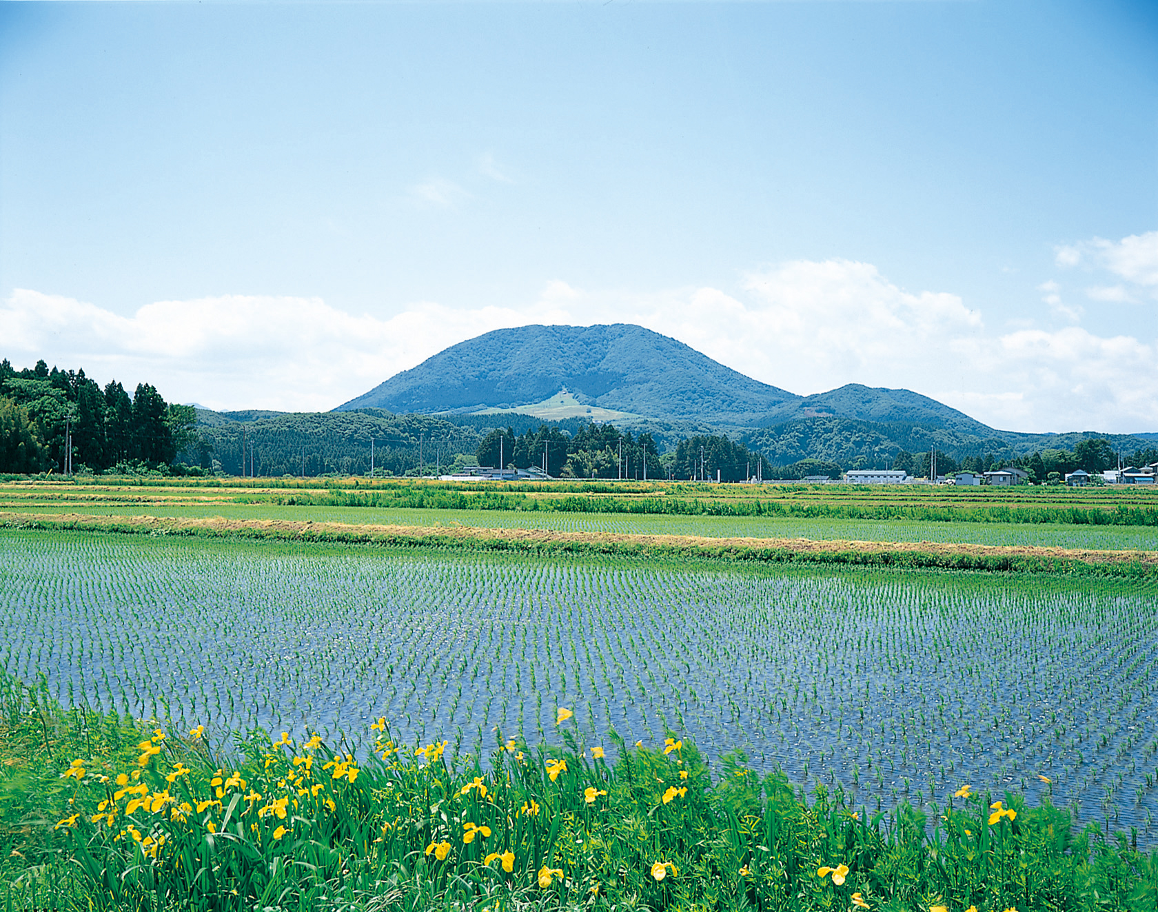 No.310017 薬莱山