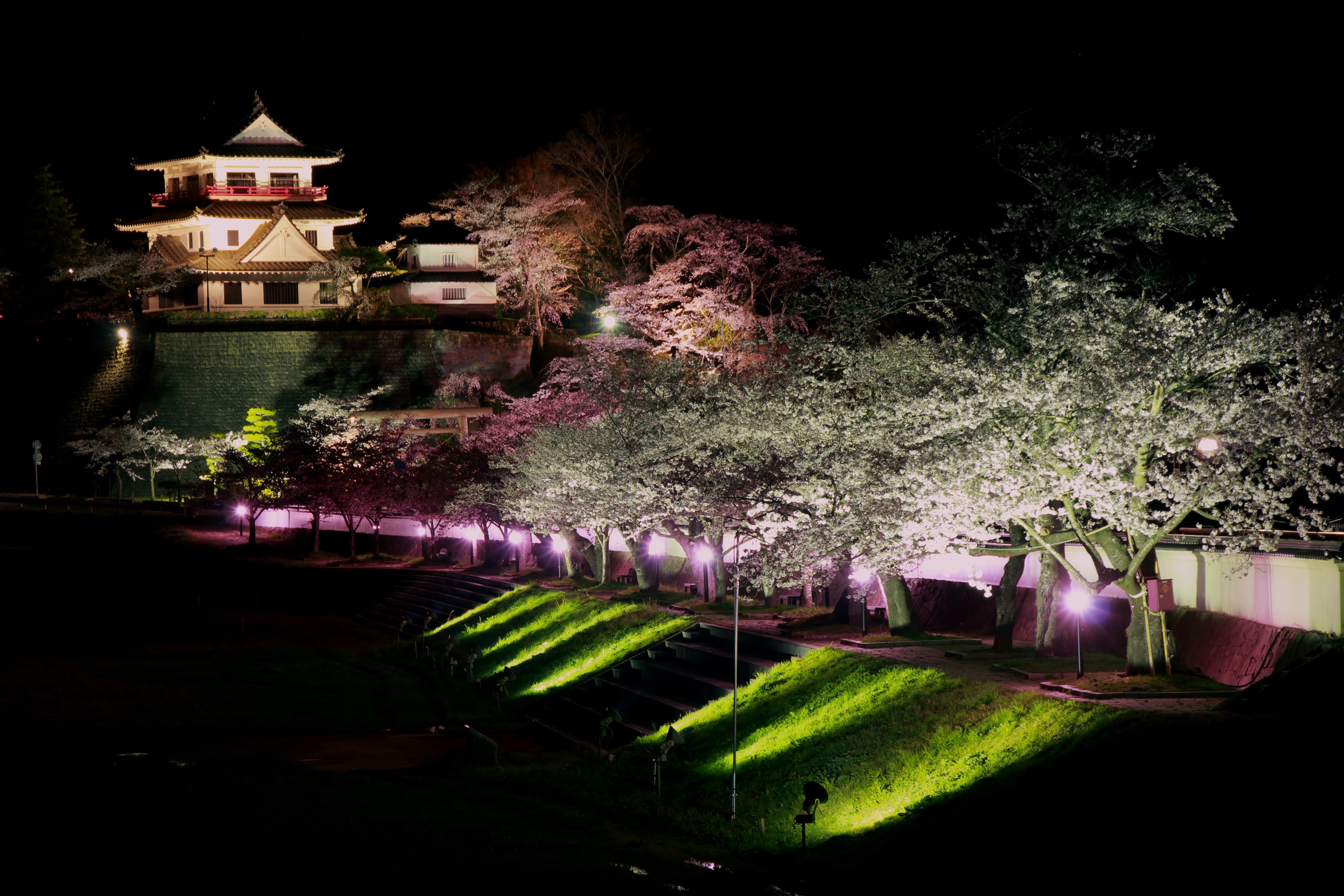 No.320012 桜まつり
